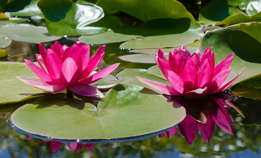 everyday-heroes-walking-with-the-wounded-water-lily-second-pic